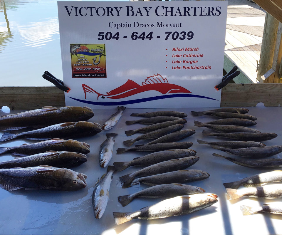 Victory Bay Charters Captain Draco limited out charter