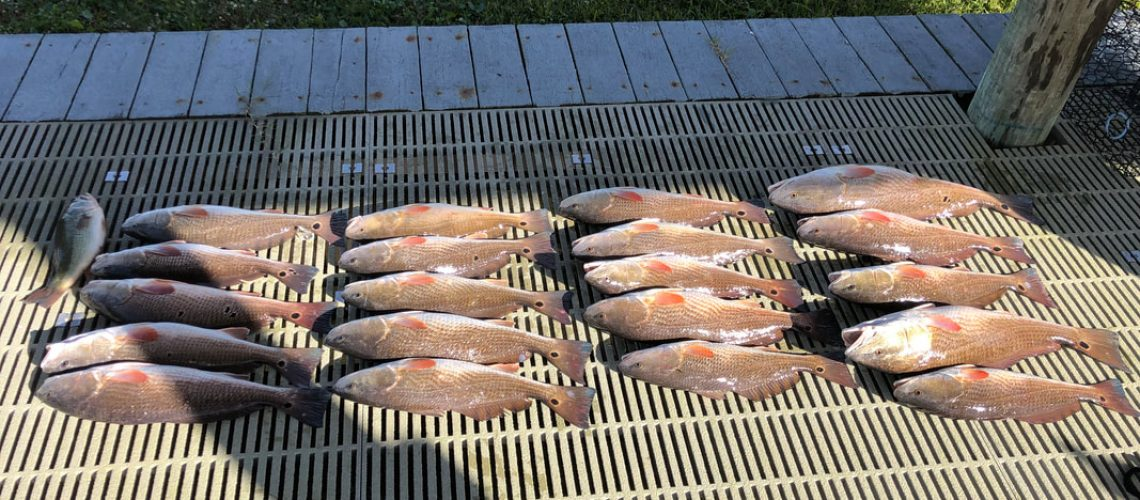 Redfish glare